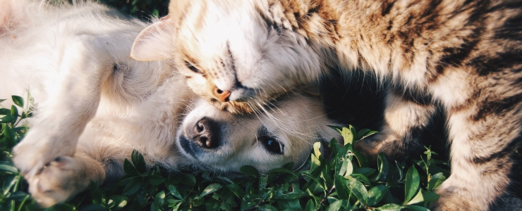4 Ways to Keep Your Pet Happy and Healthy